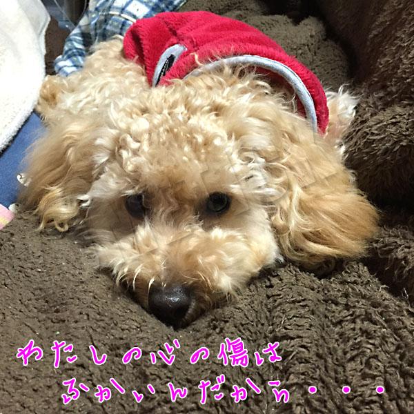 toyp_kizuwa